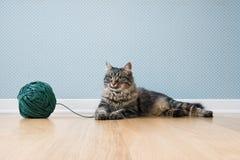 与线团的猫 免版税库存图片