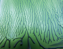 与线的有趣的纹理绿色背景和 库存照片