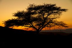 与结构树剪影的横向在日落 免版税库存图片