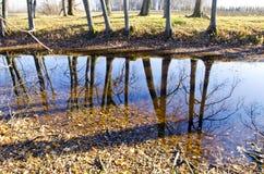 与结构树反映的秋天横向在池塘 库存图片