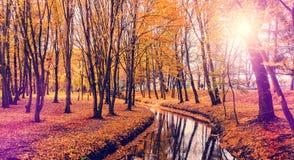 与结构树和河的秋天横向 美妙的自然背景 免版税库存照片