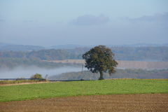 与结构树和雾的横向 库存照片