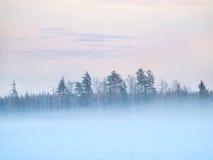 与结构树的冬天域在雾 免版税库存照片