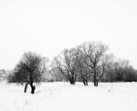 与结构树的冬天有雾的横向在雪 免版税库存照片