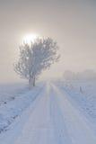 与结构树的冬天横向下雪包裹和路 免版税库存图片