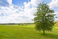 与结构树的夏天横向 图库摄影