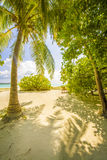 与结构树的热带海滩 图库摄影