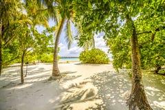 与结构树的热带海滩 库存照片