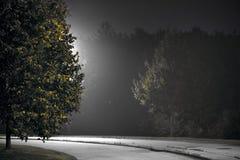 与结构树的街道在夜间 免版税库存图片