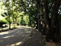与结构树的街道 库存图片