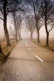 与结构树的路 免版税库存图片
