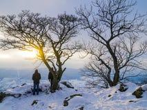 与结构树的Wintersunset 免版税图库摄影