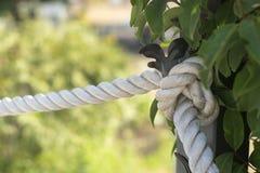 与结的绳索在树干附近 库存图片