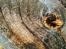 与结的老木纹理 库存照片