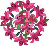 与绯红色和桃红色百合的花束 图库摄影