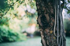 与绳索的老树 免版税库存照片