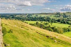 与绵羊、树和农场土地的谷 免版税库存照片