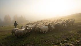 与绵羊和山羊的罗马尼亚风景在农场的秋天时间 免版税库存照片