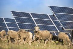 与绵羊的太阳电池板 免版税库存图片