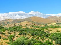 与绿橄榄树、黄色小山和山峰的美丽如画的风景在雪 免版税库存图片