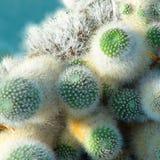 与绿色仙人掌植物的背景 图库摄影