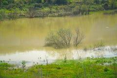 与绿色分支的树在洪水以后的河床上 免版税库存图片