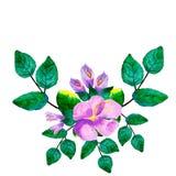 与绿色叶子、紫色花和分支的水彩手画花圈 向量例证