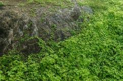 与绿色叶子和土的大绿色叶子的岩石围拢的土,样式,地球纹理和尘土 免版税库存图片