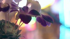 与绿色叶子和开花的兰花的热带装饰 股票录像