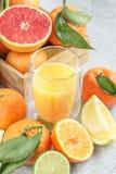 与绿色叶子和汁液的柑橘水果 柠檬,石灰, clemen 免版税图库摄影