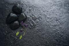 与绿色叶子和smallthe逗人喜爱的紫色花12月的黑石头 图库摄影