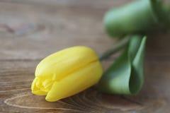 与绿色叶子特写镜头的黄色郁金香在木棕色背景 宏指令 库存图片