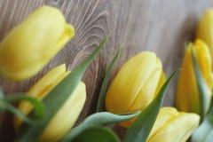 与绿色叶子特写镜头的黄色郁金香在木棕色背景 宏指令 库存照片