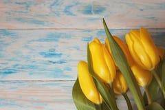 与绿色叶子特写镜头的黄色郁金香在蓝色木背景 宏指令 免版税库存图片