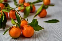 与绿色叶子的三个新鲜的蜜桔在灰色木板 在被弄脏的背景的水多的橙色普通话蜜桔桔子 免版税库存图片