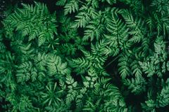 与绿色叶子的五颜六色的水多的背景象蕨叶子 免版税库存图片