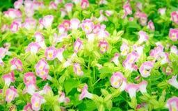 与绿色叶子的五颜六色的花 免版税库存照片