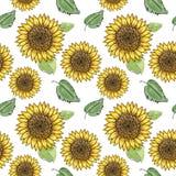 与绿色叶子的向日葵传染媒介无缝的样式,仿效墨水和水彩在白色背景 手拉的头状花序 皇族释放例证