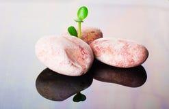 与绿色叶子的小卵石 图库摄影