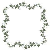 与绿色叶子的常春藤藤 0 8可用的eps花卉框架向量vesion 例证绿色植物,藤的枝杈 皇族释放例证