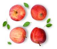 与绿色叶子的整个红色节目苹果在白色backgroun isloated 免版税库存图片