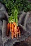 与绿色叶子的新近地被收获的有机成熟红萝卜 autum 库存照片