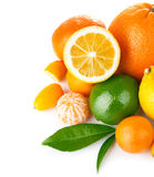 与绿色叶子的新鲜的柑桔 免版税库存图片