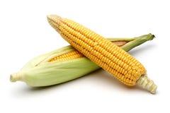 与绿色叶子的新鲜的玉米 库存图片
