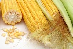 与绿色叶子的新鲜的玉米 免版税库存图片