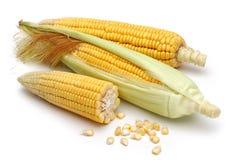 与绿色叶子的新鲜的玉米 免版税库存照片