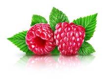 与绿色叶子的新鲜的莓果莓,被隔绝 免版税图库摄影