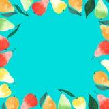 与绿色叶子的明亮的成熟水多的梨橙色绿色红色和黄色颜色在蓝色背景的一个框架 图库摄影