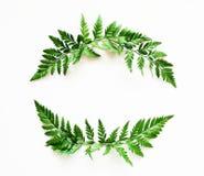 与绿色叶子的框架花圈 库存图片