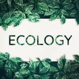 与绿色叶子的生态文本 友好, eco环境,概念 库存照片